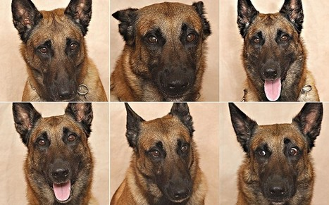 Scientists prove you really can tell what your dog is feeling by looking at its face - Telegraph | animals and prosocial capacities | Scoop.it