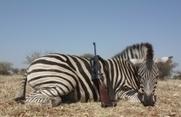 Poľovačka v Namíbii ako darček pre otca - Recenzia.info | Favorite blog posts | Scoop.it