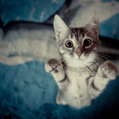 5 Things Cats Know About Life That We Should Learn   I Have Cat   Cat Club Elite News   Scoop.it