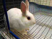 Bunny's Blog: Adorable Adoptables at Western PA Humane Society | Pet News | Scoop.it