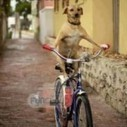 A dog drive cycle | 2 dogs are very happy | Scoop.it