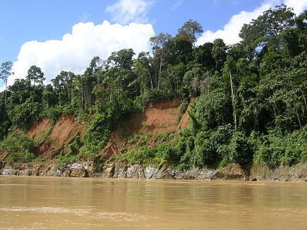 Amazon's Trees Facing Extinction - Conservation Articles & Blogs - CJ   Wildlife and Conservation   Scoop.it