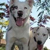 A blind dog and a deaf dog become inseparable friends | Laws for Paws | Scoop.it