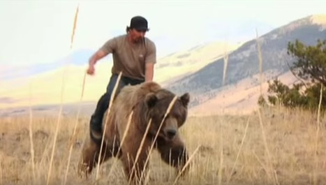 VIDEO: This Man Walks AND RIDES A 900 Lb. Grizzly Bear Through The Forests Of Montana | Advocating for Wildlife | Scoop.it
