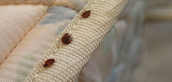 CAA Continues to work on Bed Bug Legislation in 2016 | Legislation + Eviction Law News | Scoop.it