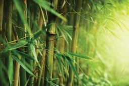 Bamboo Bamboozle | Bamboo based products | Scoop.it