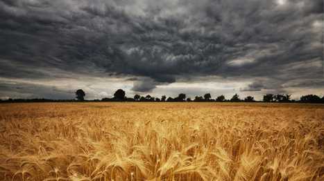 Geoengineered Food? Climate Fix Could Boost Crop Yields, But With Risks   WBUR & NPR   Climate change challenges   Scoop.it