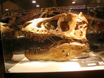 Dinosaur skull seized from Wyoming home | Histoire et Archéologie | Scoop.it
