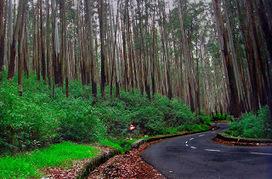 Pine Forest Ooty | OotyBudgethotels | Scoop.it