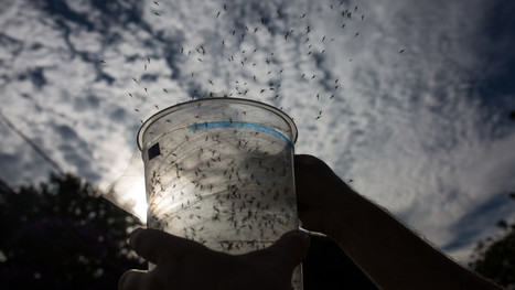 Watch these biotechs as the Zika virus moves to the U.S.   Business News & Finance   Scoop.it