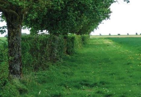 Chaque Etat membre décidera de la conduite des surfaces d'intérêt écologique | Production végétale | Scoop.it