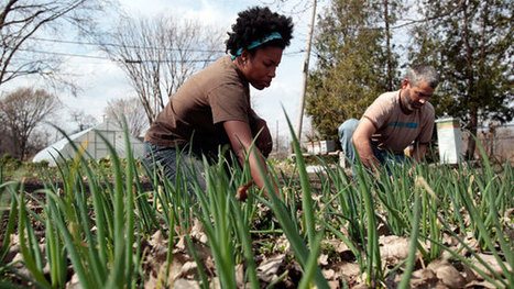Detroit's Big Dig: Will Urban Farming Get Them Out of the Hole? | Vertical Farm - Food Factory | Scoop.it