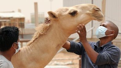 Pets to be tested for deadly Mers coronavirus | IDM News | Scoop.it