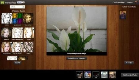 Meowfoto, 'webapp' para aplicar filtros y efectos a tus fotografías y crear 'collages'   NTICs en Educación   Scoop.it