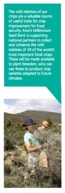 Kew does crops | Agricultural Biodiversity | Scoop.it