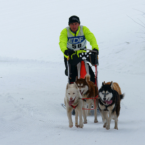 Dog Mushing, Mushers, their Dogs and their stuff | Inuit Nunangat Stories | Scoop.it