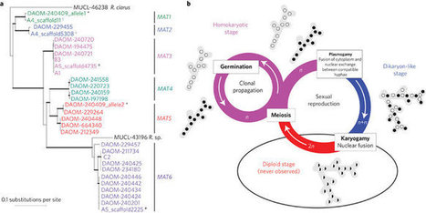 Nature Microbiology: Evidence for the sexual origin of heterokaryosis in arbuscular<br/>                    mycorrhizal fungi (2016) | Plant-Microbe Interaction | Scoop.it