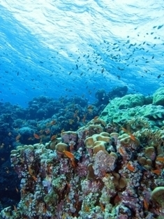 Oceans Could Lose $1 Trillion in Value Due to Acidification | environnement, | Scoop.it
