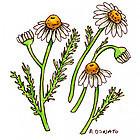 Integrative Medicine: Disclaimer | Plant Based Nutrition | Scoop.it