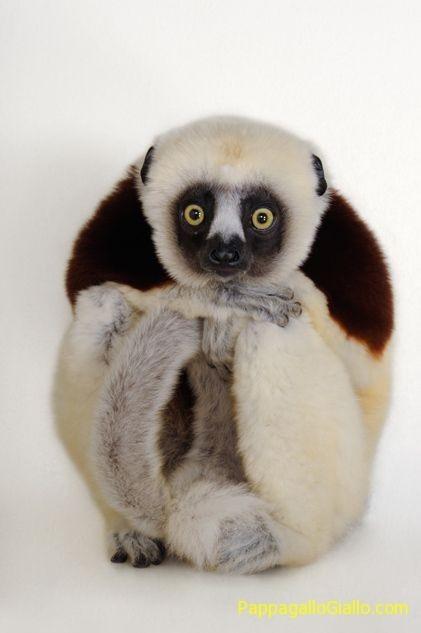 Foto degli animali dal National Geographic (36 foto) - PappagalloGiallo.com   ANIMALI   Scoop.it