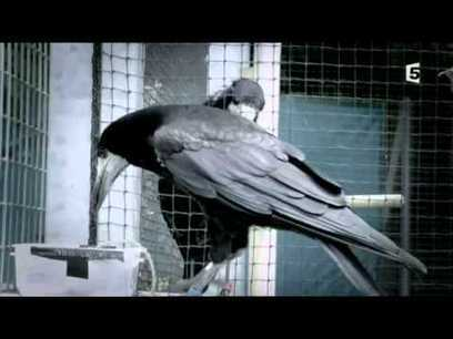 Cervelle d'oiseau France 5 (Documentaire Complet) - YouTube