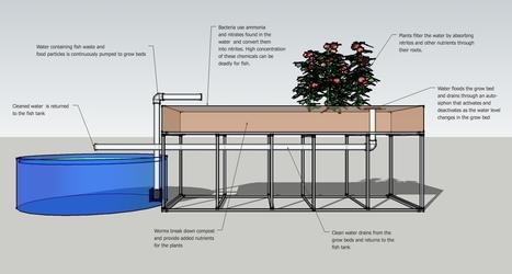 Aquaponics: 20,000 Pounds of Fish & 70,000 Pounds of Vegetables on a 1/4 Acre | Tilapia et jardin | Scoop.it