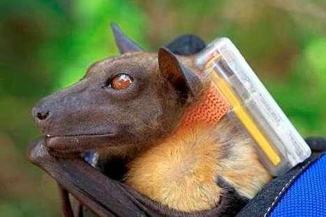 Space Station safari's ultimate wildlife research vantage point | GarryRogers Biosphere News | Scoop.it