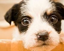 Demand an end to cruel gassing... - The Petition Site | Animal Abuse. | Scoop.it