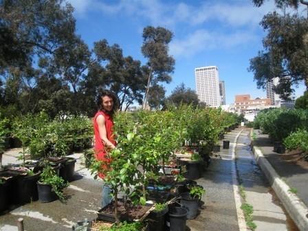 San Francisco aprueba ley que rebaja los impuestos a terrenos baldíos con huertos comunitarios | Plataforma Urbana | consum sostenible | Scoop.it