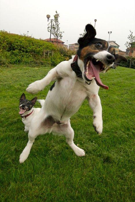 Un village menace d'abattre les chiens en cas de taxes impayées   Mais n'importe quoi !   Scoop.it