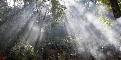 Afrique centrale: qui a changé la forêt en savane?   Actualités Afrique   Scoop.it