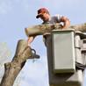 Eli's Tree and Stump Grinding Service