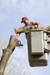 Choose flawless tree trimming by Eli's Tree and Stump Grinding Service. | Eli's Tree and Stump Grinding Service | Scoop.it