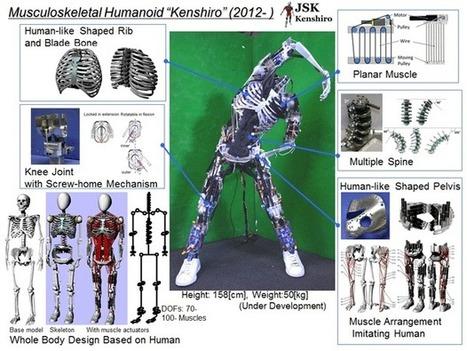 L'université de Tokyo développe un robot avec 'des muscles et des os' | Technology in automotive systems and robotics | Scoop.it
