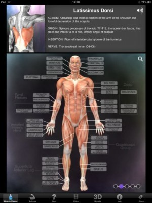 Muscle & Bone Anatomy 3D is a great anatomy app for medical students | Medical Apps | Scoop.it