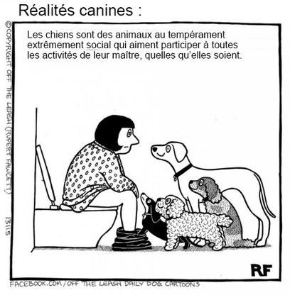 Si les chiens pouvaient parler, voici probablement ce qu'ils diraient ! Ces 15 images sont hilarantes... | BRAIN SHOPPING • CULTURE, CINÉMA, PUB, WEB, ART, BUZZ, INSOLITE, GEEK • | Scoop.it