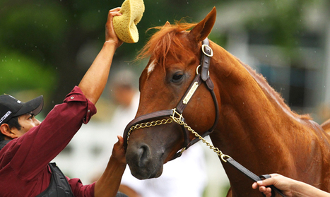 Complete List of Every Horse in Belmont Stakes Field | Horse Racing News | Scoop.it