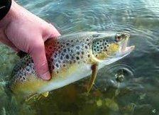 Samedi, c'est l'ouverture de la pêche à la truite..... - bjr à toutes et ... | French DB home | Scoop.it