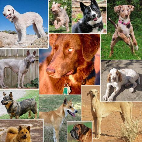 20 of the World's Rarest Dog Breeds   Animals100   Scoop.it