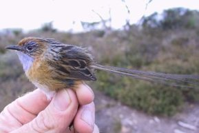 New nature reserve bolsters protection for swamplands species   Advocating for Wildlife   Scoop.it