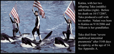 Keto and Tilikum Express the Stress of Orca Captivity. | #OrcaAvengers | Scoop.it