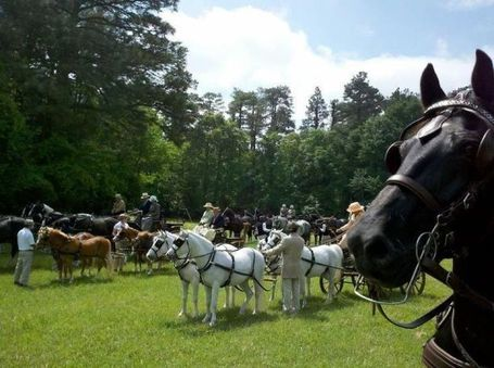 Southern Pines 4 in hand drive | Carriage Driving Radio Show | Scoop.it