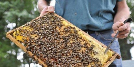 Une nouvelle menace pour les abeilles | L'œil de Dijon Céréales | Scoop.it