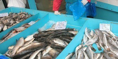 Le dernier poisson français de l'année   Le Monolecte   Scoop.it