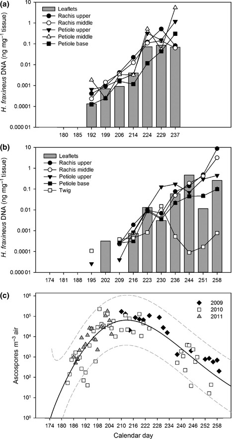 Fungal diversity and seasonal succession in ash leaves infected by the invasive ascomycete Hymenoscyphus fraxineus | MycorWeb Plant-Microbe Interactions | Scoop.it