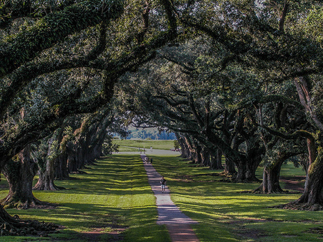 Oak Alley Plantation   Flickr - Photo Sharing!   Oak Alley Plantation: Things to see!   Scoop.it
