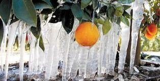 Cold threatens California, Southwest crops | Mail Tribune (Medford, OR) | CALS in the News | Scoop.it