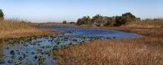 Bipartisan Coalition wants Scott to Champion More than just Everglades Restoration | Sunshine State News | The Everglades Puzzle | Scoop.it