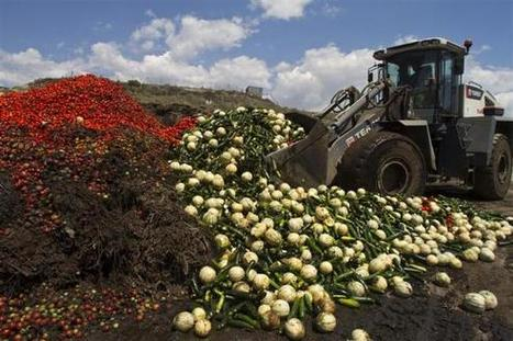 Rampant food waste a barrier to cutting poverty: World Bank | Sustain Our Earth | Scoop.it
