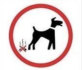 L'or canin | technologie 5ème | Scoop.it